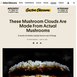 These Mushroom Clouds Are Made From Actual Mushrooms