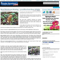 Morel Mushroom Hunting – 50 million hunt these delights – The Ozarks Sentinel