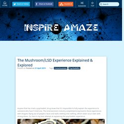 The Mushroom/LSD Experience Explained & Explored