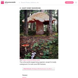 41. Giant Honey Mushroom - 46 Magical Wild Mushrooms You Won't…