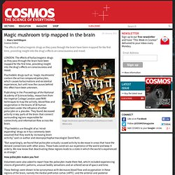 Magic mushroom trip mapped in the brain