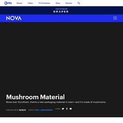 Mushroom Material