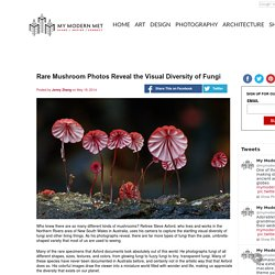 Rare Mushroom Photos Reveal the Visual Diversity of Fungi