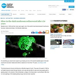 Glow-in-the-dark mushroom rediscovered after 170 years | MNN - Mother Nature...