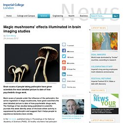 Magic mushrooms' effects illuminated in brain imaging studies