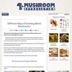 Growing Morel Mushrooms: Multiple Techniques