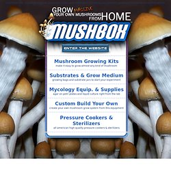 Mushroom kits and mycology supplies, Mushbox makes it happen.