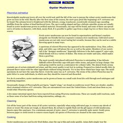 Wild About Mushrooms: Oyster Mushroom