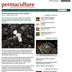 Growing Mushrooms from Coffee