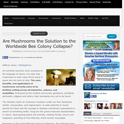 Are Mushrooms the Solution to the Worldwide Bee Colony Collapse?