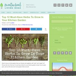 Top 12 Must-Have Herbs To Grow In Your Kitchen Garden