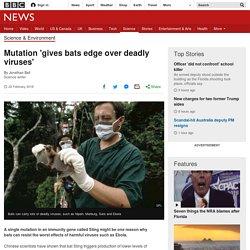 Mutation 'gives bats edge over deadly viruses' - BBC News