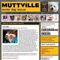 Muttville: Rescue, foster, adoption, and hospice for senior dogs, and support and education for the people that love them