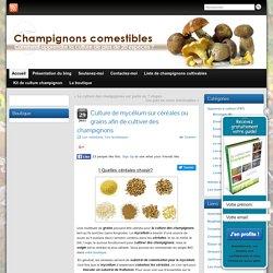 La culture de mycélium et champignons sur céréales ou grains
