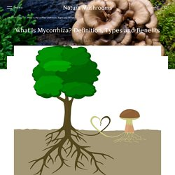 What Is Mycorrhiza? Definition, Types, Usage and Benefits