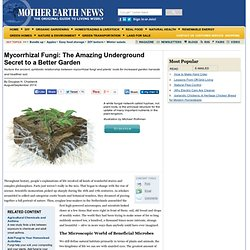 Mycorrhizal Fungi: The Amazing Underground Secret to a Better Garden