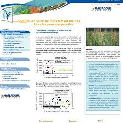 Mycotoxines et champignons