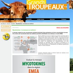 GTMAG 28/05/15 Mycotoxines : la menace se renforce (infographie BIOMIN)