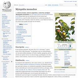 Myiopsitta monachus