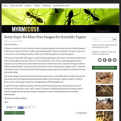 MYRMECOS - Insect Photography - Insect Pictures