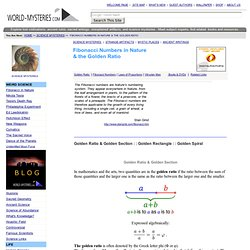 Science Mysteries, Fibonacci Numbers and Golden section in Nature