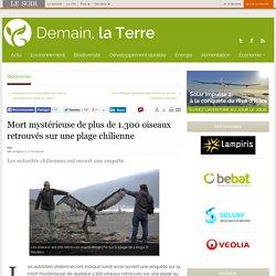 Mort mystérieuse de plus de 1.300 oiseaux retrouvés sur une plage chilienne