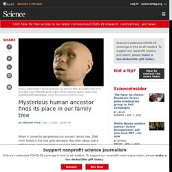 Mysterious human ancestor finds its place in our family tree