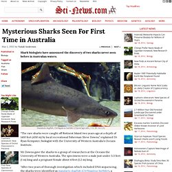 Mysterious Sharks Seen For First Time in Australia