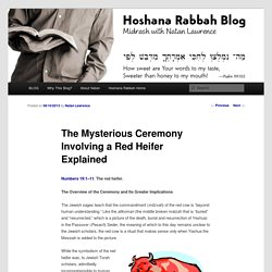 The Mysterious Ceremony Involving a Red Heifer Explained - Hoshana Rabbah BlogHoshana Rabbah Blog