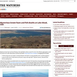 Mysterious brown foam and fish deaths at Lake Mead... - The Watchers