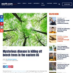 EARTH - JANV 2019 - Mysterious disease is killing off beech trees in the eastern US