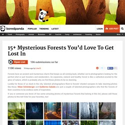 Mysterious Forests