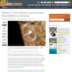 What Is This? Mysterious Amazon Web Baffles Scientists