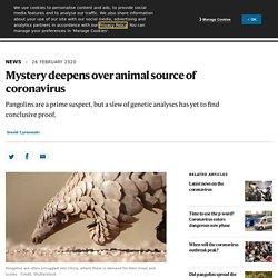 Mystery deepens over animal source of coronavirus