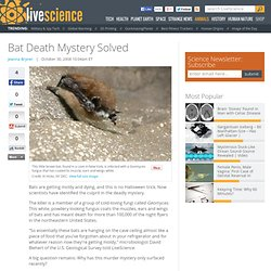Bat Death Mystery Solved
