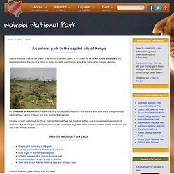 The Nairobi National Park - Enjoy Kenya Wildlife in the City