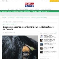 Besançon: naissance exceptionnelle d'un petit singe Langur de François