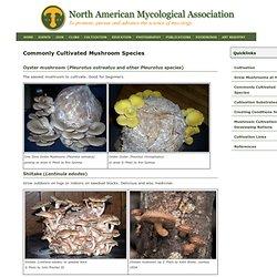 NAMA: Common Cultivars