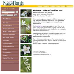 Native Plants of the Carolinas & Georgia