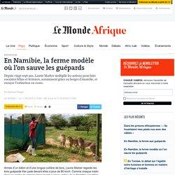 En Namibie, la ferme modèle où l'on sauve les guépards