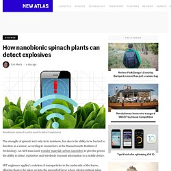 How nanobionic spinach plants can detect explosives