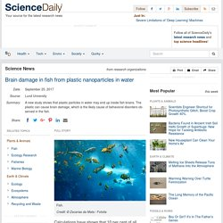 Brain damage in fish from plastic nanoparticles in water