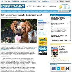 Narbonne : un chien à adopter d'urgence au chenil