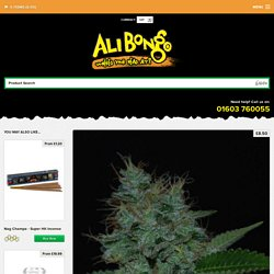 Cream of the Crop - Narcotherapy Autoflowering Feminised Single Cannabis Seed - Ali Bongo