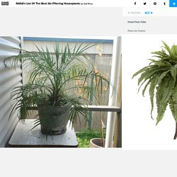 NASA's List Of The Best Air-Filtering Houseplants