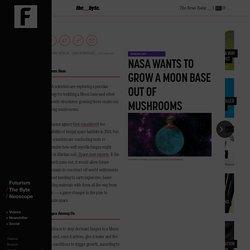 NASA Wants to Grow a Moon Base Out of Mushrooms