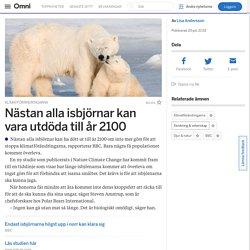 Nästan alla isbjörnar kan vara utdöda till år 2100