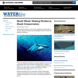 Making Strides in Shark Conservation