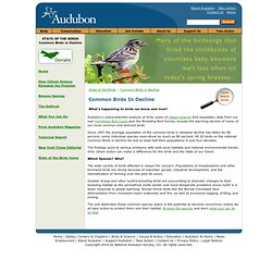 National Audubon Society - Birds in Decline
