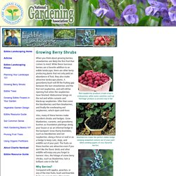 Growing Berry Shrubs (National Gardening Association)